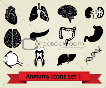 Anatomy set 1
