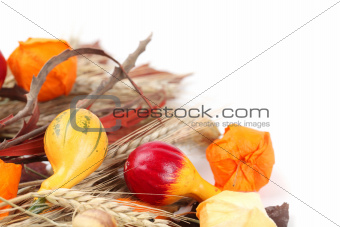 Autumn still life with colorful pumpkins