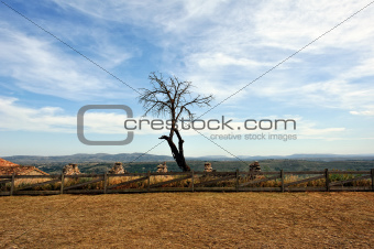 Landscape with dry tree with mountain view. Morella in Spain.