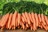 Fresh carrots