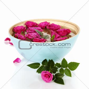 pink roses in bowl