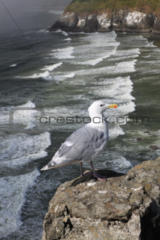 Lonely Sea Gull