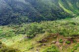 Green valley, Sri Lanka