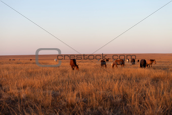 Herd of horses grazing in pasture