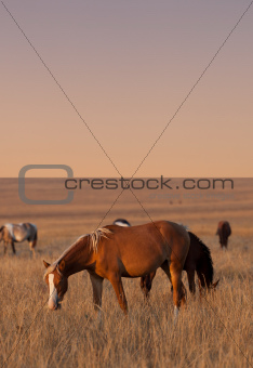 Horses grazing in evening pasture