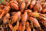 Background with many crawfishes