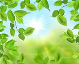 Beautiful soft green background