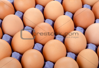 Tray of eggs in cardboard packing