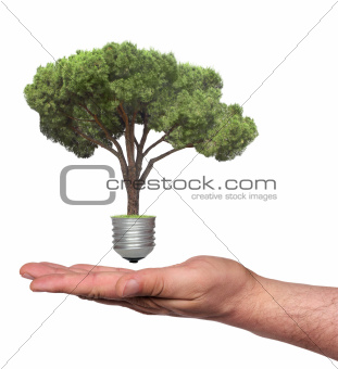 pine growing from the base of the light bulb and hand