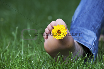 single yellow hawksbeard flower between the toes