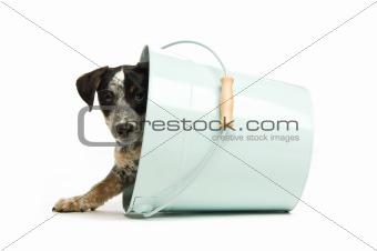 Cute terrier puppy