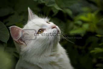 Cat Among Green