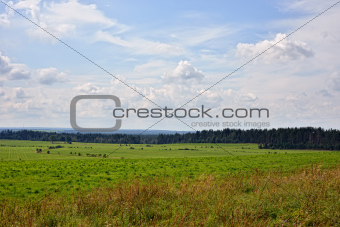 Landscape with rural view. Sunny day.