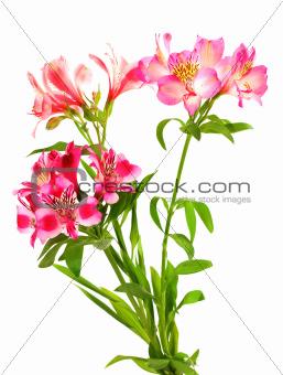 Bouquet of lilies (alstroemeria)
