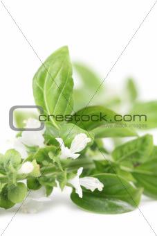 Blooming basil