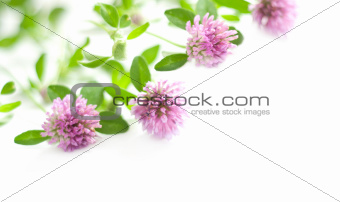 background with pink clover