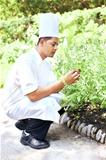 Young chef in fresh green basil plantation