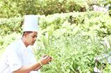 Young cook looking at the fresh herbs in garden