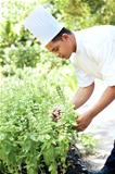 Young chef tending a herb garden
