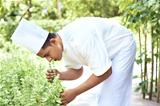 Male cook smelling fresh herbs in garden