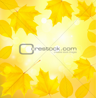 Autumn background with yellow leaves  Back to school illustration