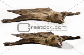 Cinnamon bear rug