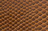 Brown snake skin background