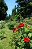 Roses In Park