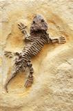 Ancient Lizard Fossil