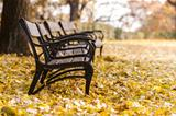 Autumnal park with bench