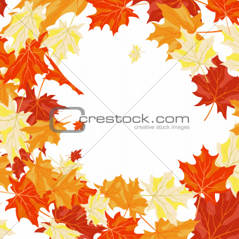 Autumn maples