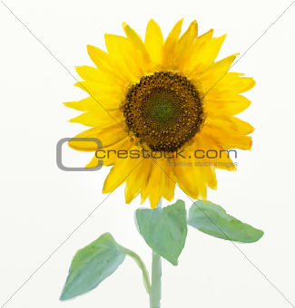 Oil and watercolor stylized picture - Sunflower