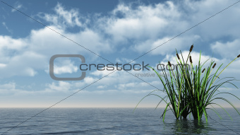 reed on water