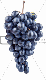 fresh blue grape fruits