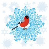 Bullfinch and a snowflake