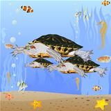 Turtles in the sea