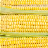corn texture