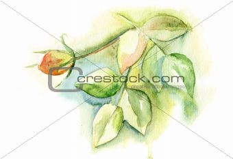 Watercolor illustration with green leaves and rose flower