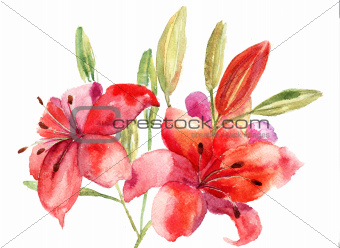 Beautiful Lily flowers, watercolor illustration