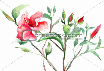Stylized Malva flower, watercolor illustration 