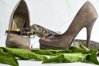 Snake and High Heels