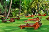 Beach beds between tropical trees