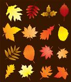vector fall leaves set