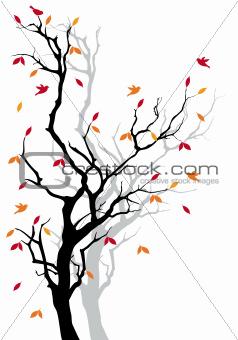 Autumn tree, vector