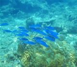 Bright blue shoal 