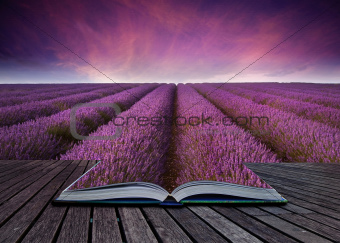Lavender landscape coming out of a book