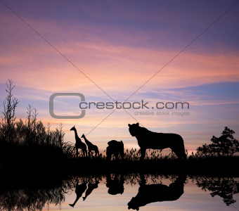 African safari silhouette image at sunset