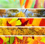 Set of  Different Autumn&#39;s Banners / Nature