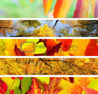 Set of  Different Autumn's Banners / Nature