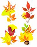 Composition Set of Different Autumn Leaves / isolated